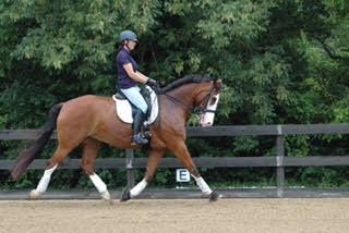Action Ace - 2005 KWPN Gelding ($75,000 - $100,000)