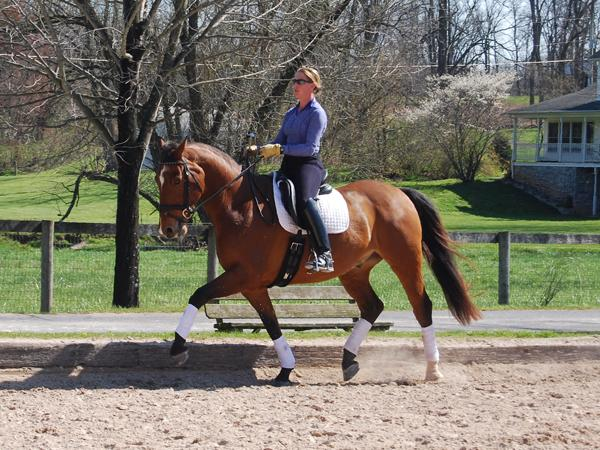 Adje - 2005 KWPN Gelding ($30,000 and Under)