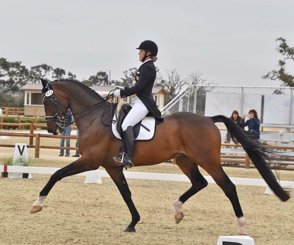 Andreo - 2005 KWPN Gelding ($100,000 and Up)