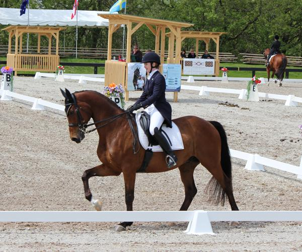 Biolek - 2001 Trakehner Gelding - ($100,000 and Up)