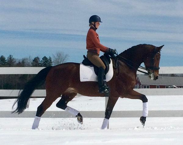 Antigua - 2005 KWPN Gelding ($100,000 and Up)