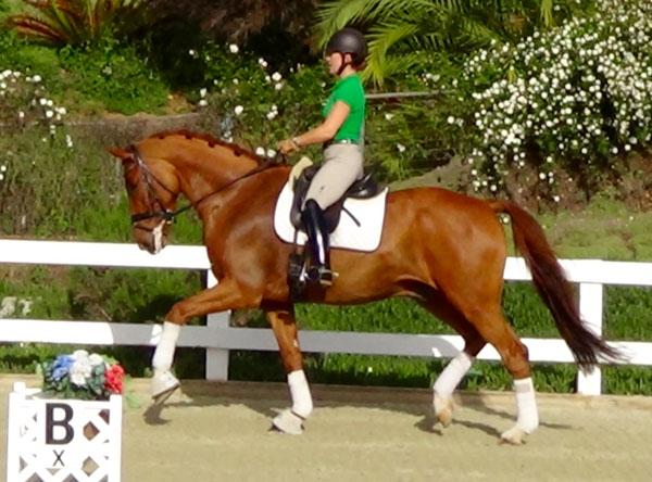 Arik - 2005 Dutch Warmblood Gelding ($50,000 - $75,000)