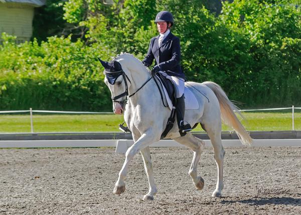 Aztec SSF - 2005 Dutch Warmblood Gelding ($50,000 - $75,000)