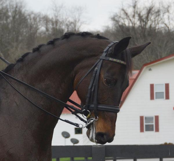 Beatrix - 2006 KWPN Mare - ($100,000 and Up)