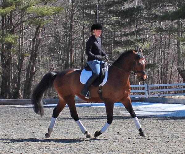 Bedazzeled - 2001 Belgian Warmblood Mare - ($30,000 and Under)