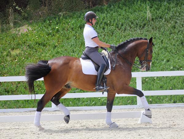 Binck - 2006 KWPN Gelding ($100,000 and Up)