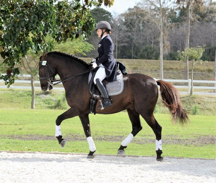 Blackstone Interagro - 2005 Lusitano Stallion ($100,000 and Up)