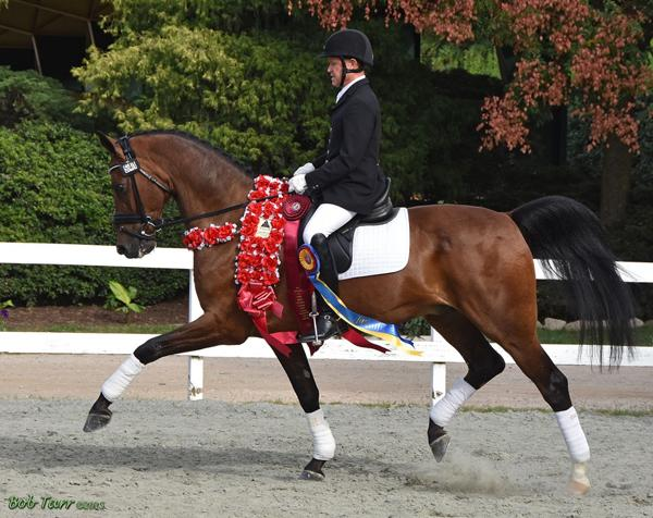 Uwannabeme Wh - 2005 Dutch Warmblood Cross Gelding ($75,000 - $100,000)