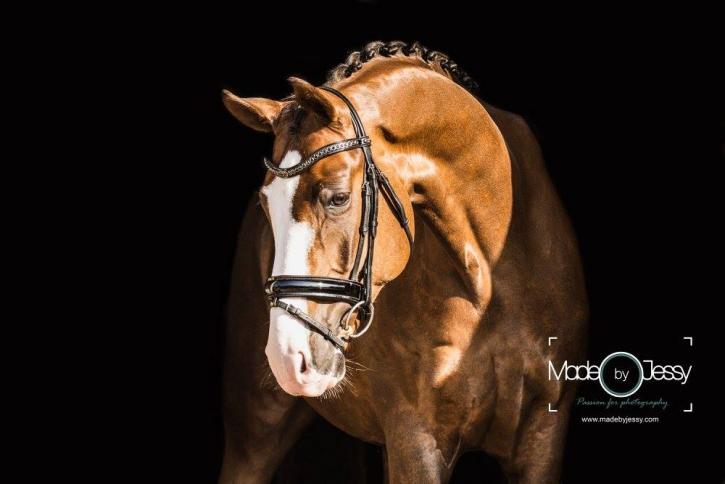 Billionaire, a 6 year-old Bellisimo x Sir Donnerhall gelding whom Janine has brought along from the basics. (Photo: Made by Jessy Photography)