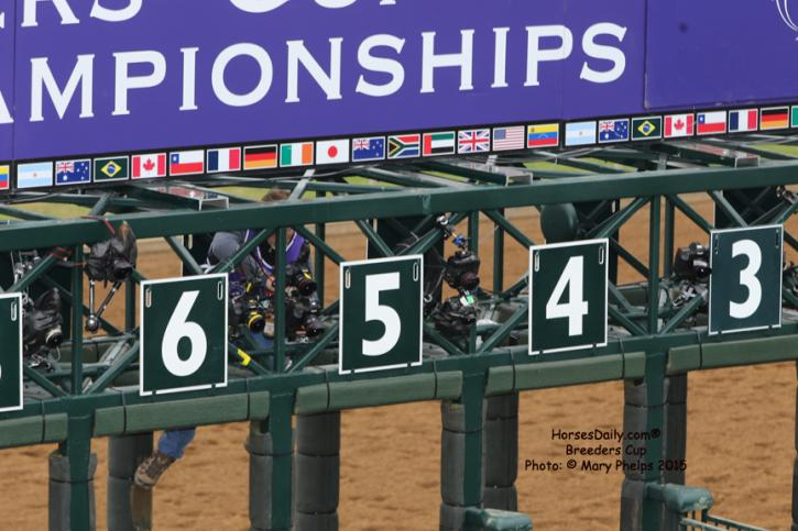 Remote cameras beign set up in the starting gate<br />Photo: © Mary Phelps 2015