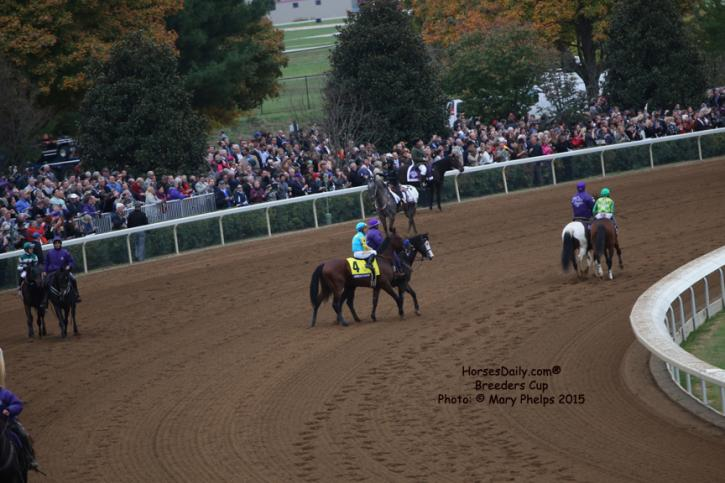 American Pharoah and Victor Espinoza taking their time heading to the starting gate so the crowd can have one last long look.<br />Photo: © Mary Phelps 2015