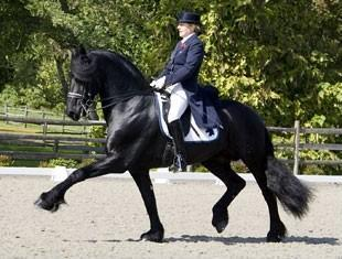 Brend 413 - KFPS Friesian Stallion