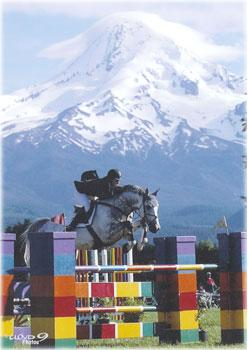 Lot # : 13 - Cartouche Z - 1998 Gray Zangersheide Stallion (Carthago Z x Le Mexico x Gag xx)