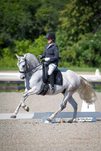 Cassie - 2008 Andalusian (PRE) Gelding ($50,000 - $75,000)