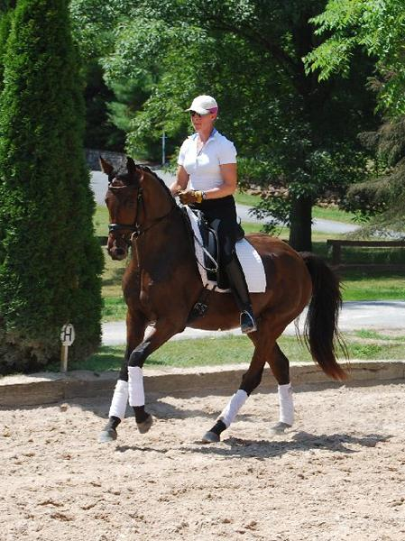 Celaeno - 2013 Warmblood Cross Gelding ($30,000 and Under)