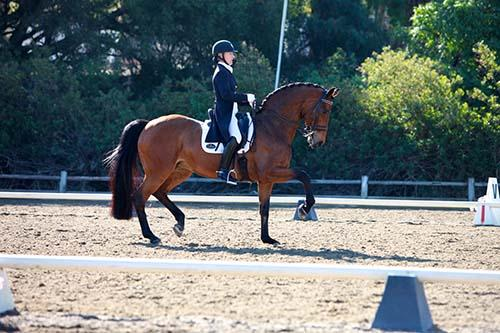 Cenna - 2001 Danish Warmblood Mare ($100,000 and Up)