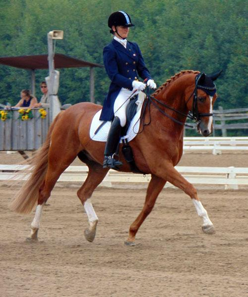 Danbury - 2006 Hanoverian Gelding - ($100,000 ad Up)