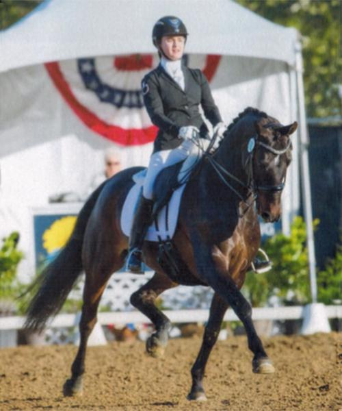Dante - 2007 British Hanoverian Gelding ($100,000 and Up)