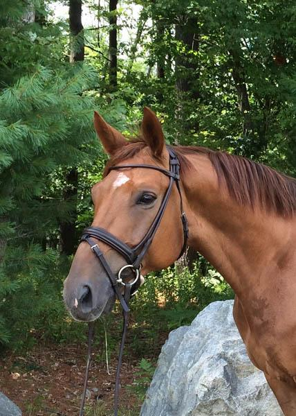 Dear Friend - 2008 Westfalen Gelding ($30,000 - $50,000)