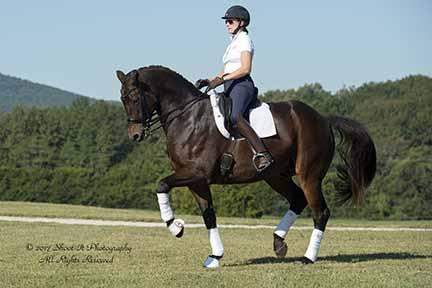 Lord Sisley - 2004 Oldenburg Gelding ($100,000 and Up)