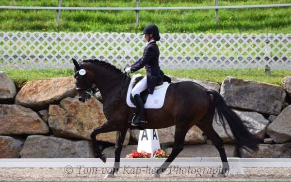 Delfiano - 2003 Hanoverian Gelding ($100,000 and Up)