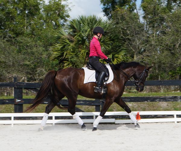 Deo Volente - 2011 Oldenburg Gelding ($30,000 and Under)