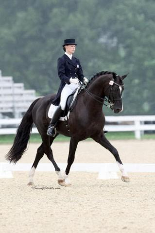 Devon Heir - 2001 Black Hanoverian Stallion (DeNiro - Rubinstein I- Argentan I)