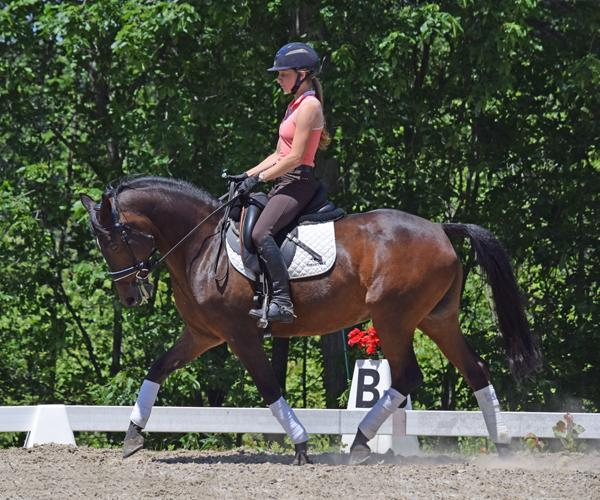 Dipped In Chocolate - 1999 German Riding Pony Gelding ($30,000 and Under)