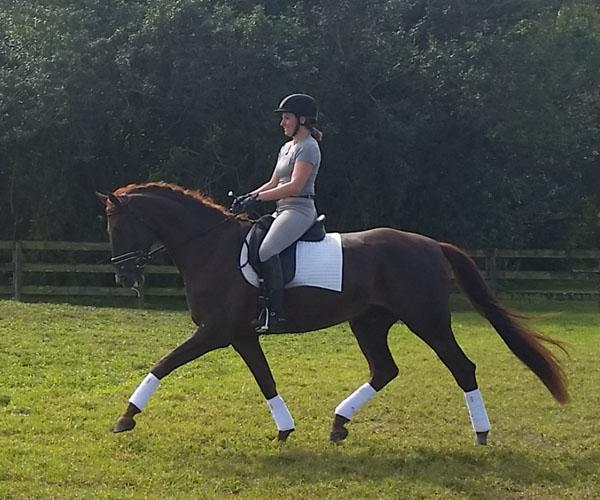 Don Alison - 2011 Danish Warmblood Gelding - ($50,000 - $75,000)