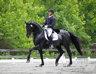 Don Principe - 1999 Hanoverian Stallion