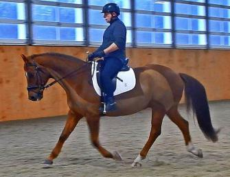 Donahue - 2002 Hanoverian Gelding ($30,000 and Under)