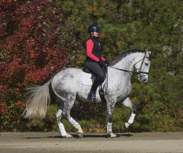 Dorian Gray - 2008 KWPN Gelding - ($100,000 and Up)