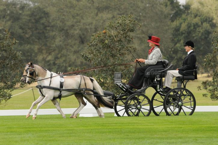 "Mary Phelps and ""The Gangsters"" Al Capony and Bugsy Maloney - FEI Advanced Pony Pair - Dressage - Photo: picsofyou.com"