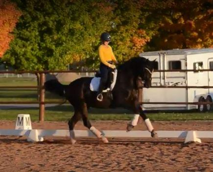 Ducati - 2007 Hanoverian Gelding ($100,000 and Up)