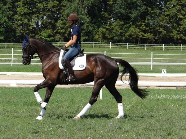 Easy Breezy - 2009 KWPN Gelding ($50,000 - $75,000)