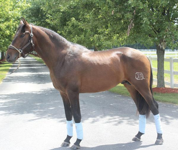 Ebanisto KR - 2013 Pura Raza Española (PRE) Stallion ($30,000 and Under)