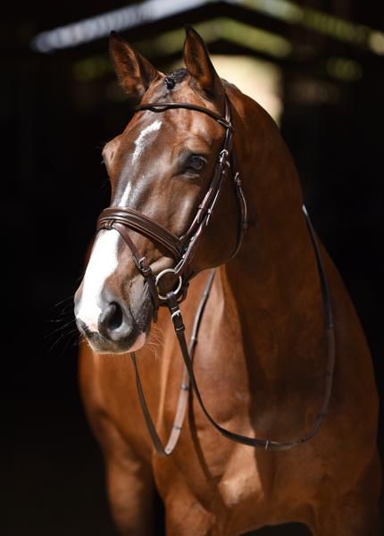Edward - 2009 KWPN Gelding ($100,000 and Up)