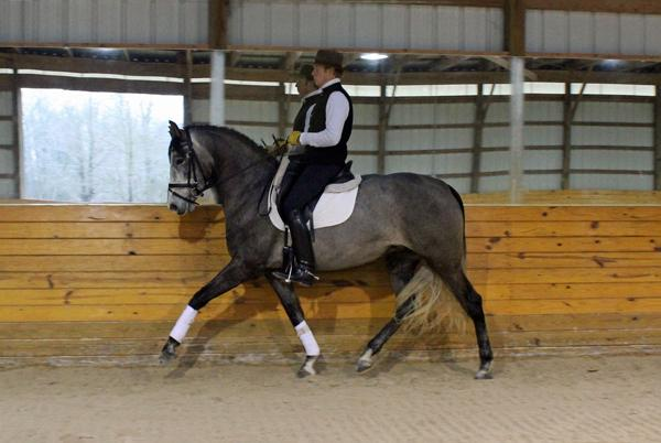 Eleison - 2013 Andalusian Mare ($30,000 - $50,000)