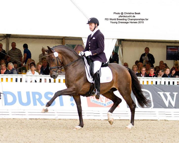 "Endel Ots (USA) and Samhitas<br />FEI World Breeding Championships<br />Dressage Young Horses 2015<br />Photo: <a href=""http://pferdezucht-beuke.de/"" target=""_blank"">Christina Beuke</a>"