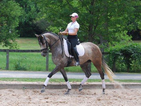 Evora - 2012 Andalusian/Thoroughbred Mare ($50,000 - $75,000)