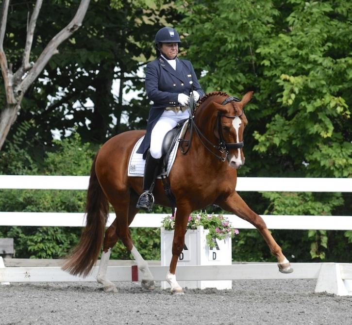 Excelsior - Lusitano Gelding ($100,000 and Up)