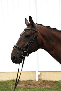 Falcor - 2004 Hanoverian Gelding ($30,000 and Under)