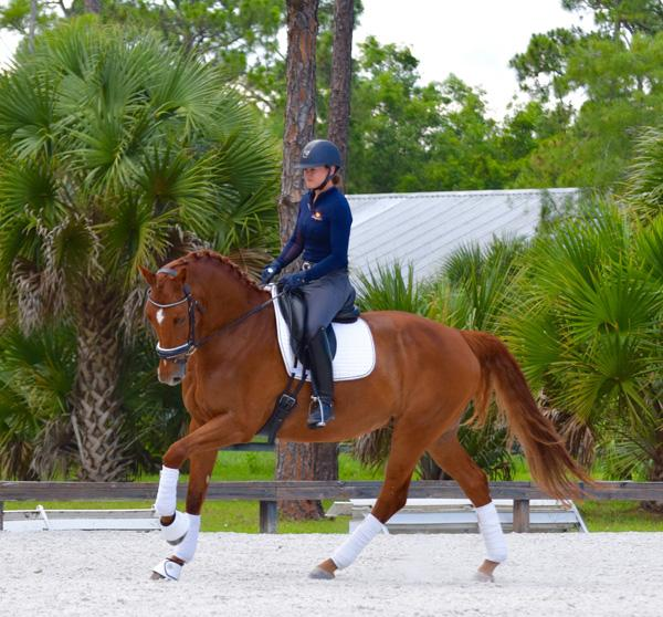 Fantastic - 2010 KWPN Gelding ($100,000 and Up)