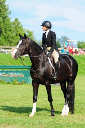 Lot # : 30 - Farscape DSF - 16.2 2007 Black Westfalen Stallion (Freestyle x Pacific Sabra x Pacific Sunset)