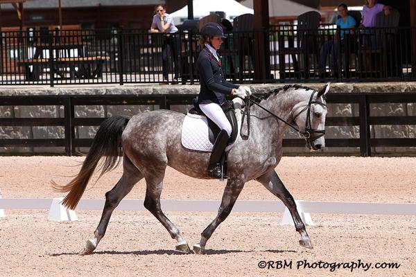 Fine Diamond MF - 2012 Hanoverian Mare ($30,000 - $50,000)
