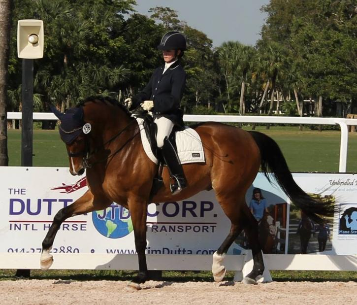 Finley, whom Janine Little brought from Training Level to schooling Small Tour, and who achieved Fourth Level scores in Florida to 76+%.  Finley's amateur owner, Shawneen Jacobs, is excited to take over the reins in 2018, and is looking forward to the many insights Little can share to maximize their partnership.
