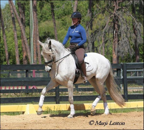 Fiona Roy - 2009 Andalusian PRE Mare ($30,000 - $50,000)