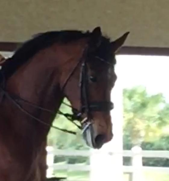 Fionello - 2008 Westphalian Gelding ($100,000 and Up)