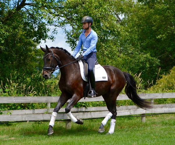 First Romance - 2012 Oldenburg Gelding ($30,000 - $50,000)