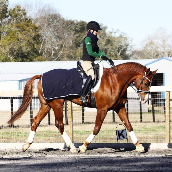 Formentor - 2010 Austrian Warmblood Gelding ($30,000 and Under)